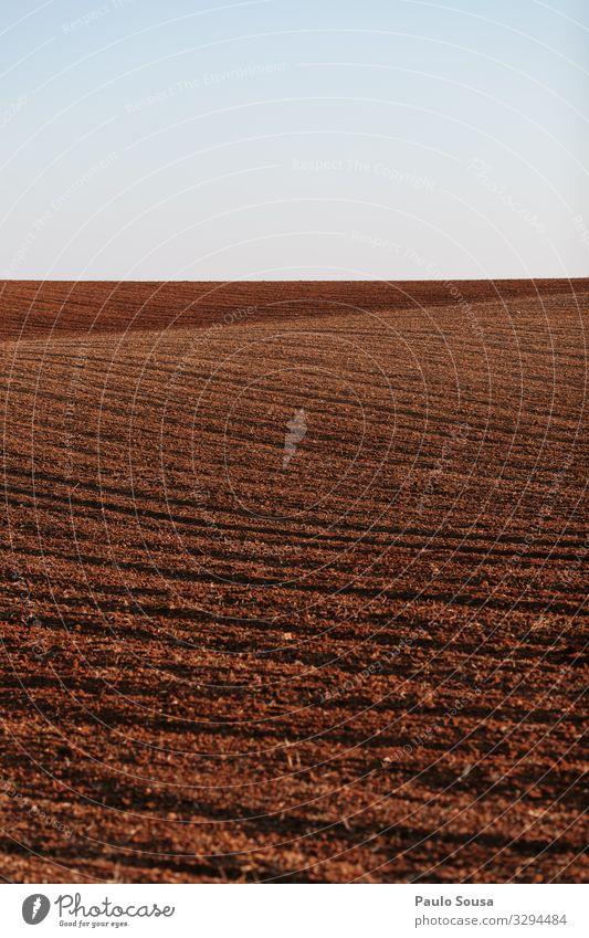 Gepflogenes Feld Umwelt Natur Landschaft Erde Herbst Winter Alentejo ästhetisch natürlich Originalität wild Business Farbe Horizont Klima nachhaltig ruhig
