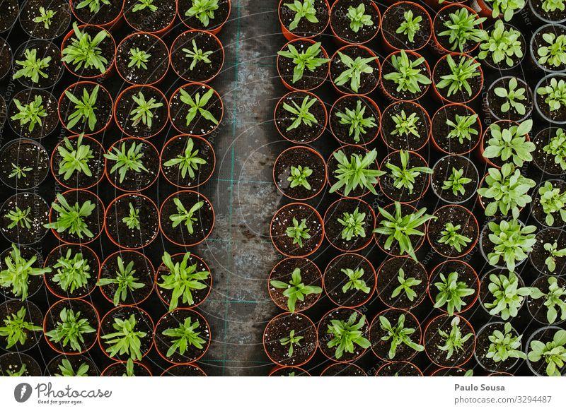 Topfpflanzen Ansicht von oben Umwelt Natur einzigartig natürlich Beginn Business nachhaltig Ordnung planen Umweltschutz Wachstum Garten Fortpflanzung Pflanze
