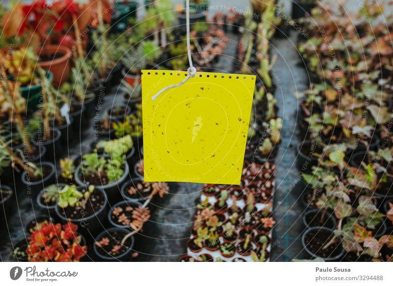 Bio-Gelb-Klebeinsektenfalle Landwirtschaft Forstwirtschaft Umwelt Natur Pflanze natürlich gelb Business Farbe Klima Kontrolle nachhaltig Falle Insektenschutz