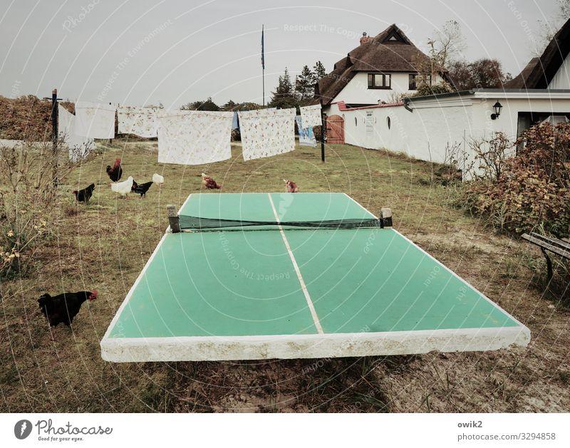 Waschtag Gras Sträucher Garten Dorf Haus Gebäude Fenster Dach Reetdachhaus Mecklenburg-Vorpommern Hühnervögel Tiergruppe Tischtennisplatte Wäsche Wäscheleine