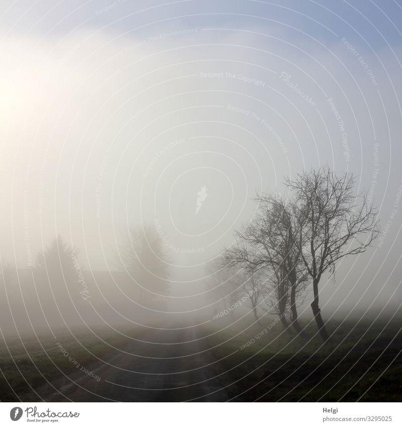 Straße und Bäume im Nebel und leichtem Sonnenschein Umwelt Natur Landschaft Pflanze Himmel Winter Baum stehen authentisch kalt natürlich blau grau schwarz