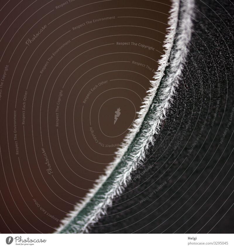 Eiszeit | Raureif an einer gebogenen Metallkante Umwelt Natur Winter Frost Am Rand festhalten frieren authentisch außergewöhnlich einfach kalt klein natürlich