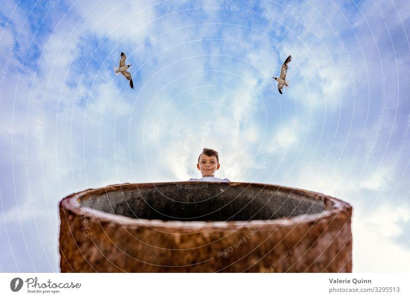 Kind Mensch Himmel Sommer Tier Strand lustig Junge Vogel Angst Metall Wildtier Kindheit 8-13 Jahre Möwe Sorge