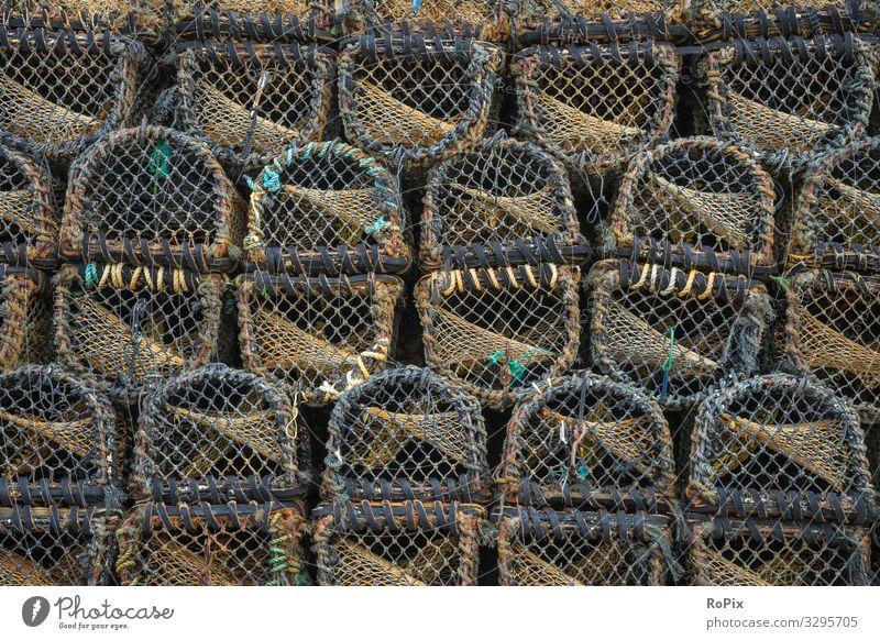 Hummerwehren auf einem Pier. Lebensmittel Fisch Meeresfrüchte Lifestyle Design Freizeit & Hobby Ferien & Urlaub & Reisen Tourismus Sightseeing Strand