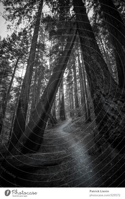Gemeinsam alt werden Natur Ferien & Urlaub & Reisen Pflanze Baum Landschaft Wald Umwelt Leben Wege & Pfade Freiheit außergewöhnlich Zufriedenheit elegant