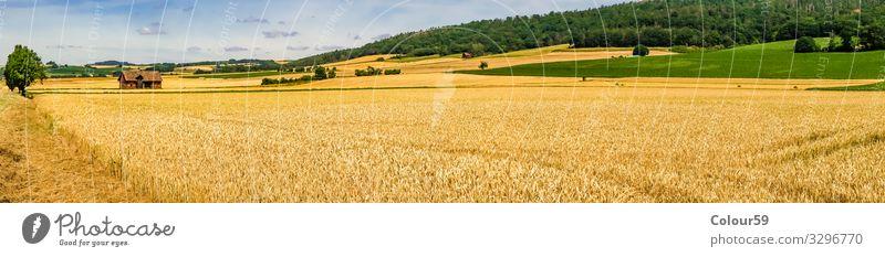 Weizenfeld Sommer Natur gelb Hintergrundbild weizen weizenfeld erntezeit saison landwirtschaft panorama draussen schön landschaft Getreidefeld getreide Farbfoto