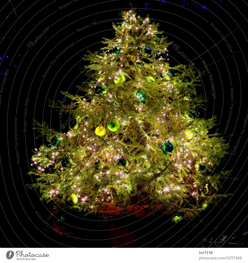 Tannenbaum im Topf Natur Weihnachten & Advent grün Baum Freude Winter Beleuchtung Garten Dekoration & Verzierung Wandel & Veränderung Zeichen Jahreszeiten