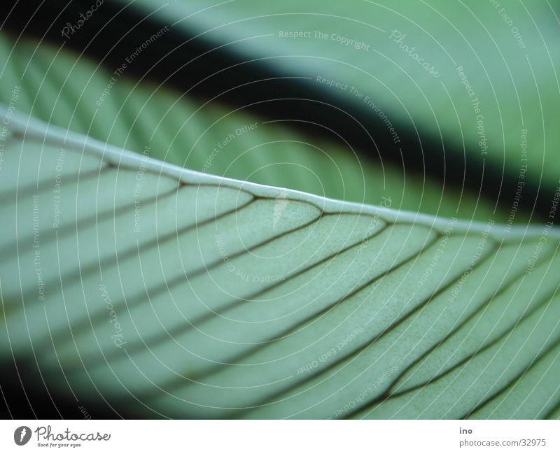 fischblatt1 Blatt Geäst grün Gefäße Muster parallel Nahaufname Blattgrün Schatten Gefängniszelle Balken Linie