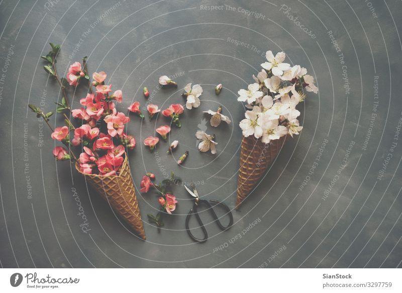Blumen in Eistüte auf Zement-Hintergrund Design Schere Natur Blumenstrauß Liebe natürlich rosa Romantik Eiswaffel Kornett Waffel flach legen Top Aussicht