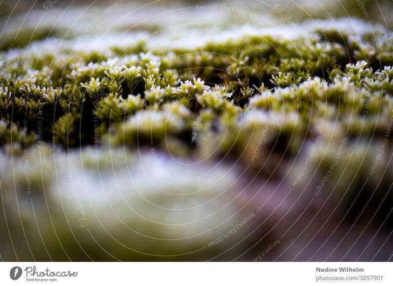Moss Umwelt Natur Pflanze Erde Moos Grünpflanze Garten Wiese Wald frisch nass natürlich unten braun grün weiß geduldig ruhig kalt Frost Ausdauer Zeit Farbfoto
