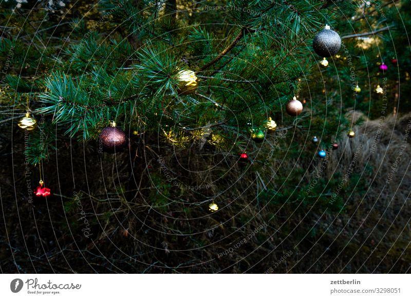 Weihnachtsbaumschmuck Weihnachten & Advent Anti-Weihnachten Baumschmuck Christbaumkugel Dekoration & Verzierung Wald Nadelbaum Kiefer Menschenleer Textfreiraum