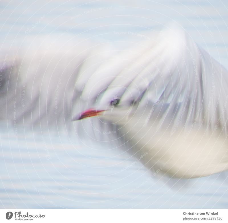 fliegende Möwe Tier Wasser Nordsee Ostsee Wildtier Vogel Tiergesicht Flügel 1 ästhetisch authentisch außergewöhnlich elegant frei hell nah natürlich schön blau