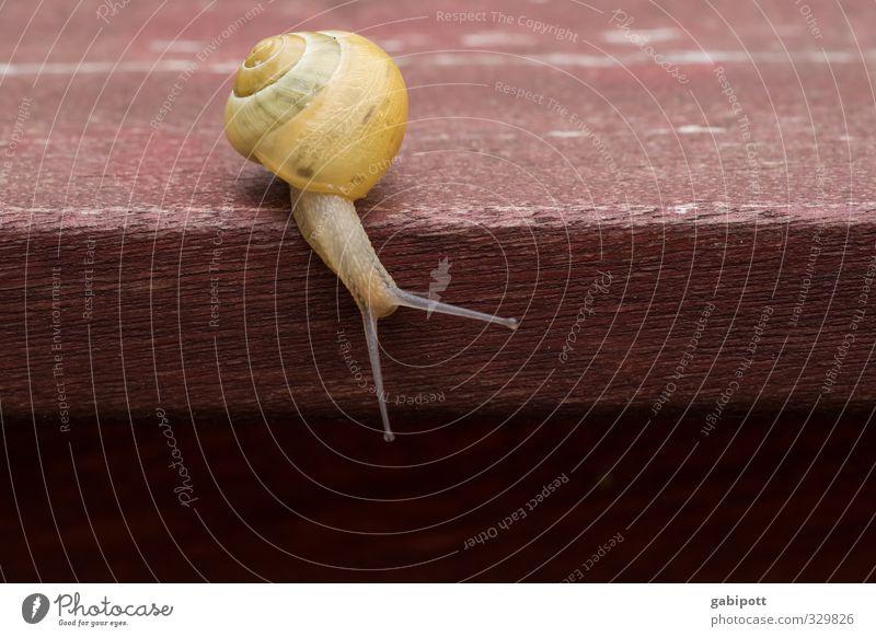 Entschleunigung Natur Tier Kraft Häusliches Leben Lebensfreude Neugier Mobilität nachhaltig Schnecke langsam Wohnmobil Schneckenhaus Zeitlupe Tischkante