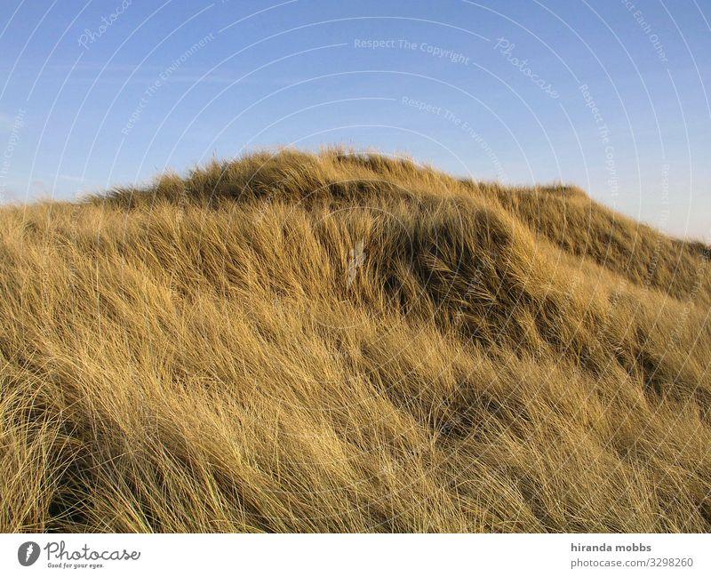 Dünenwuschel Natur Landschaft Sand Himmel Sommer Schönes Wetter Gras Hügel Küste Seeufer Nordsee Ostsee Insel blau braun gelb gold schön ruhig ästhetisch