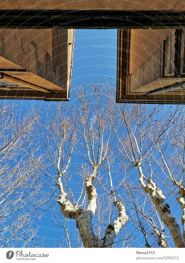 weitsicht | Blick nach oben Stadt Mauer Wand Fassade blau Himmel Baum Platane Provence südländisch Winter kalt Blauer Himmel Schönes Wetter Südfrankreich