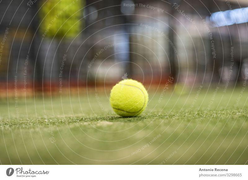 Ball Erholung Sport Gras gelb Paddeltennis Padel Tennis Objektfotografie Rasen Netz einzelne Kugel Hintergrund Fokus im Vordergrund Single Gerichtsgebäude