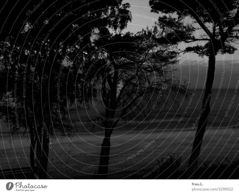 Kiefern und Meer Ferien & Urlaub & Reisen schön Landschaft Baum Einsamkeit ruhig Winter Strand dunkel Küste Wellen Ostsee Polen