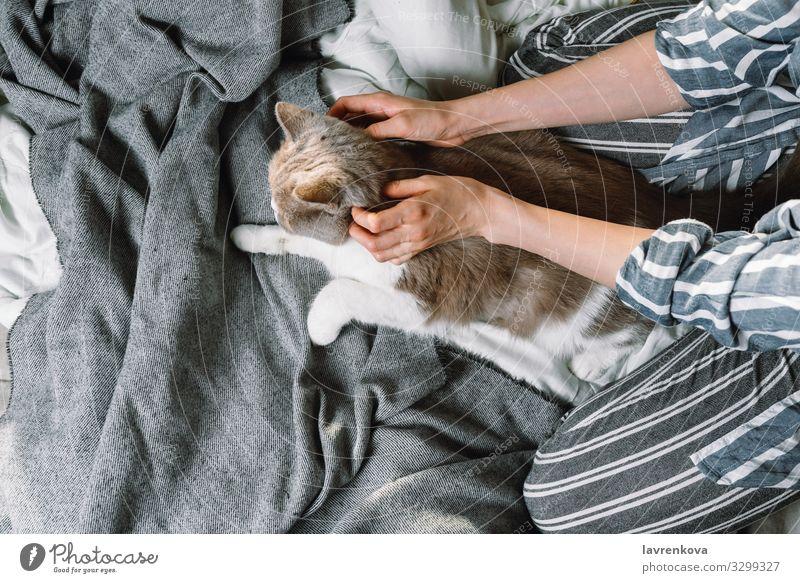 Frau streichelt ihre britische Rassekatze im Bett Herbst Bettwäsche Decke Bettdecke Bonden Britische Rasse Katze Kaukasier bequem gemütlich niedlich Flachlegung