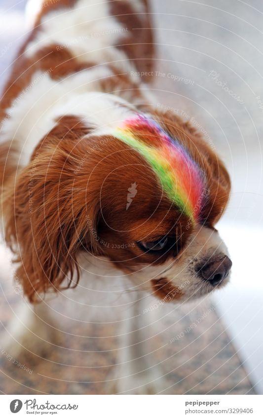 Hund Stil Kunstwerk Haare & Frisuren Punk Tier Haustier Tiergesicht Fell 1 Streifen Coolness mehrfarbig Regenbogen Farbfoto Außenaufnahme Tierporträt Oberkörper