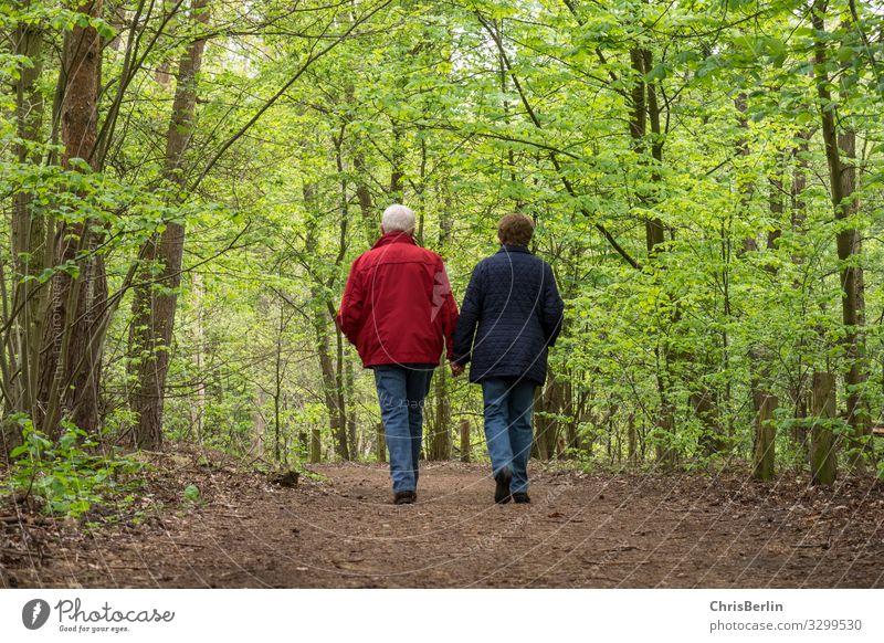 Spaziergang durch den Frühlingswald Mensch Weiblicher Senior Frau Männlicher Senior Mann Großeltern Paar Leben 2 60 und älter Natur Landschaft Baum Wald