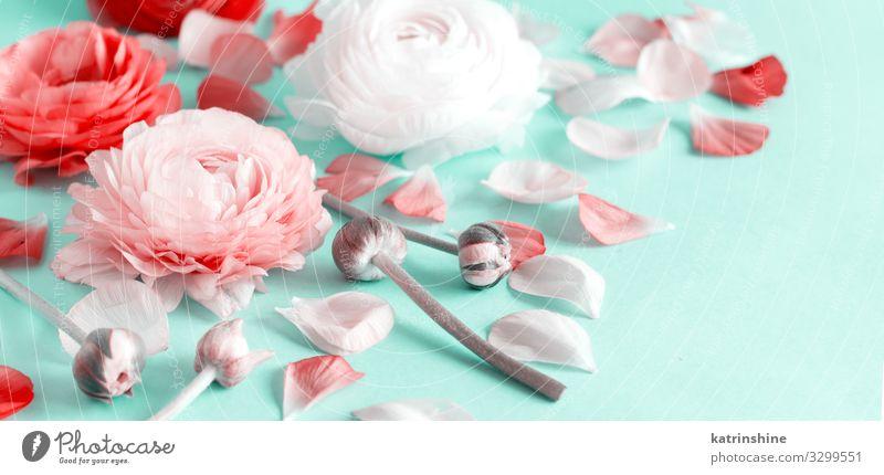 Blumen auf hellgrünem Hintergrund Design Dekoration & Verzierung Hochzeit Frau Erwachsene Mutter Rose rosa Kreativität romantisch zartes Grün hellrosa