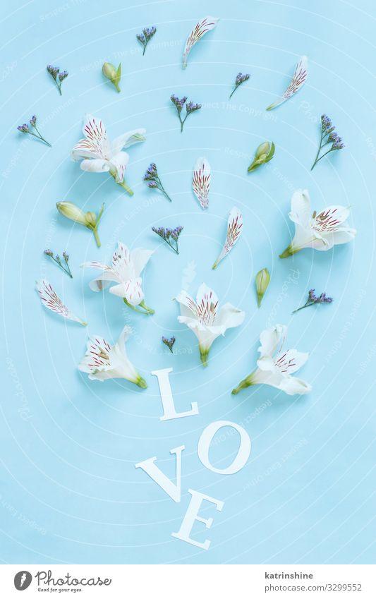 Blumen und das Wort LOVE auf hellblauem Hintergrund Design Dekoration & Verzierung Hochzeit Frau Erwachsene Mutter oben weiß Kreativität romantisch hell-blau