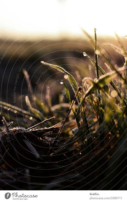 Winterpflanzen I Natur Pflanze grün Landschaft ruhig Umwelt kalt natürlich Wiese Gras braun leuchten Eis Feld glänzend