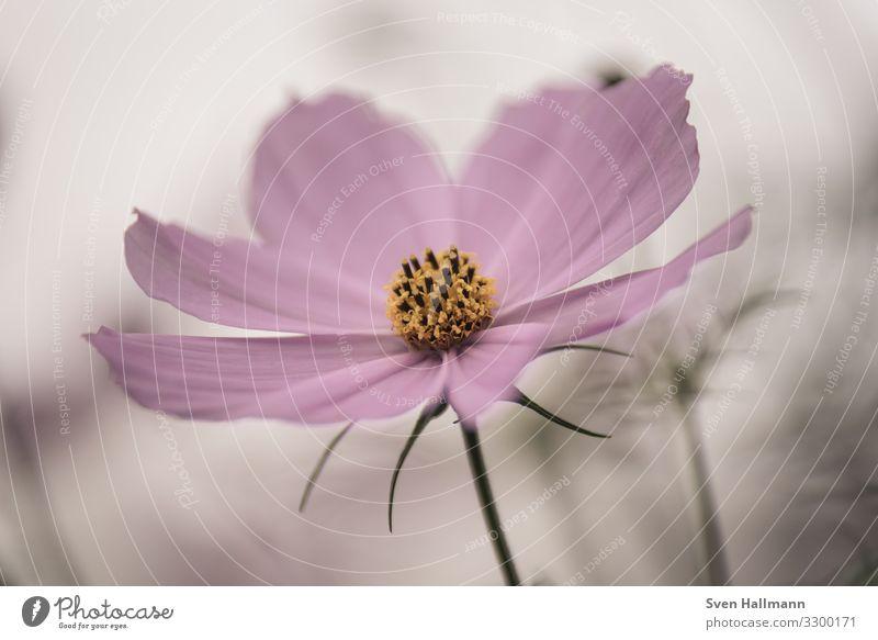 Pinke Blume vor schönem Bokeh flower Flowerpower Makroaufnahme Natur Outdoor Blüte Pflanze Sommer Nahaufnahme Detailaufnahme Frühling Blütenblatt