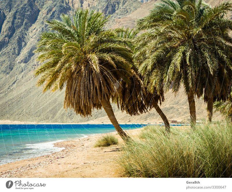 Palmen am Roten Meer auf dem Hintergrund von Klippen in Ägypten Erholung Ferien & Urlaub & Reisen Tourismus Sommer Strand Wellen Berge u. Gebirge Natur