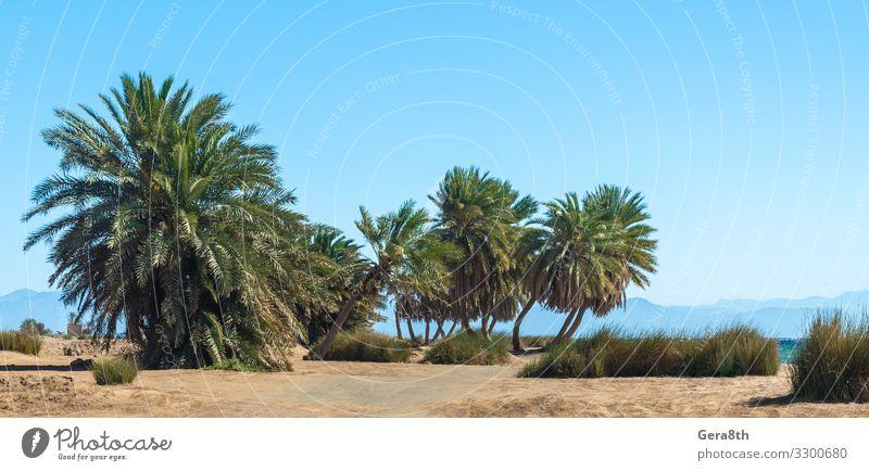 Palmen am Meer vor der Kulisse der Berge in Ägypten exotisch Ferien & Urlaub & Reisen Tourismus Sommer Strand Wellen Berge u. Gebirge Natur Landschaft Pflanze