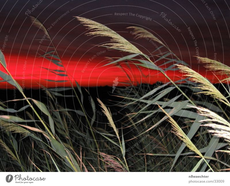 Abendrot Himmel grün rot Gras Abenddämmerung Farbenspiel
