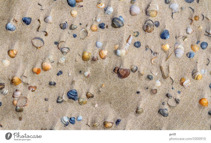 seashells on a beach Strand Meer Natur Sand Küste Muschel oben Muschelschale Hülle ausschnitt variation formatfüllend erhöhter blickwinkel außenskelett Ventil