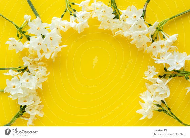 Frische Blumen auf farbigem Hintergrund von oben Lifestyle schön Dekoration & Verzierung Feste & Feiern Hochzeit Geburtstag Natur Pflanze Blüte Blumenstrauß
