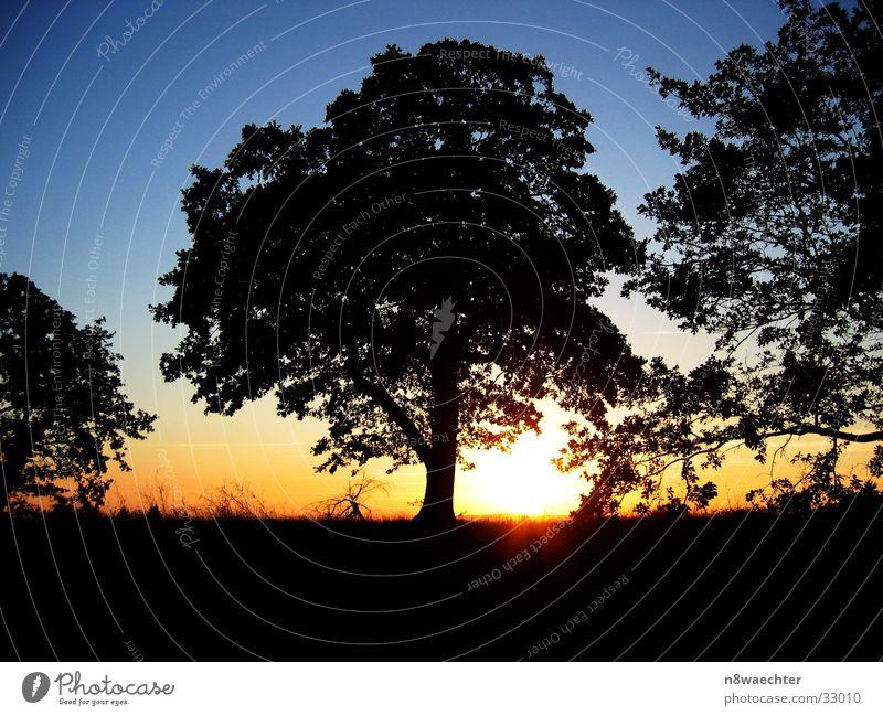 Sunset-1 Sonnenuntergang Baum Canal du Midi Südfrankreich schwarz gelb Erholung blau