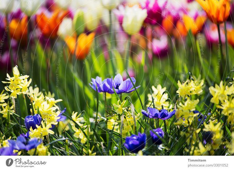 Blühende Vielfalt Blumen Blütenblatt Gräser Stängel bunt blau gelb grün orange rot Natur Pflanze Menschenleer Schwache Tiefenschärfe angenehm