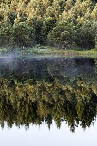 See Idylle Himmel Ferien & Urlaub & Reisen Natur Pflanze blau grün Wasser weiß Landschaft ruhig Wald Umwelt natürlich Gefühle Nebel