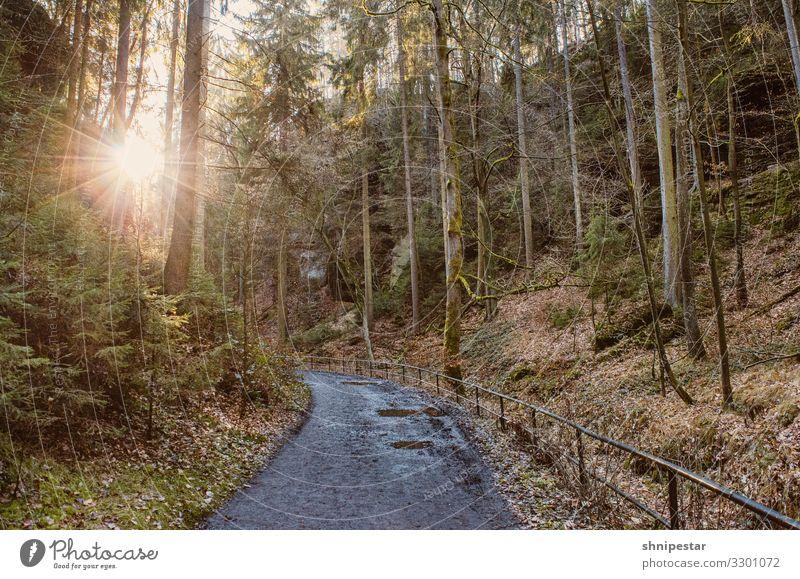 Winterliche Wanderung im Uttewalder Grund Wandern Kinder Barrierefrei Wehlen Sächsische Schweiz Sachsen Urlaub Sonne Sonnenlicht Sonnenstrahlen Pfad Route Zaun