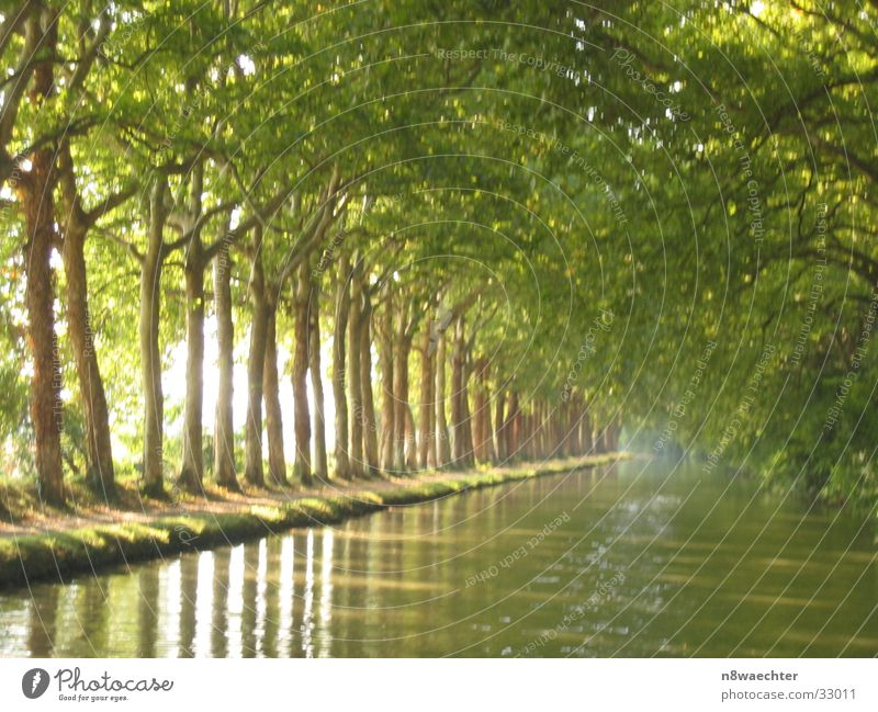 Platanenwald Wasser grün Erholung Languedoc-Roussillon Bootsfahrt Baumreihe Südfrankreich Canal du Midi