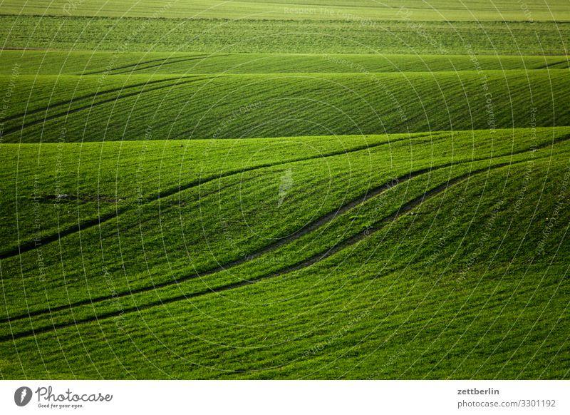 Grünes Feld Landschaft Mecklenburg-Vorpommern Rügen Ferien & Urlaub & Reisen Landwirtschaft wintergerste winterweizen Aussaat grün Weide Wellen Beule Hügel
