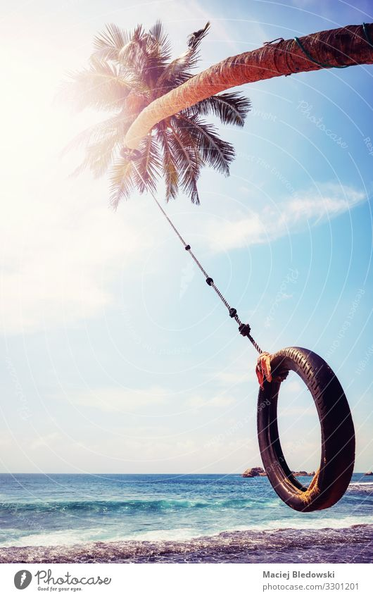 Palme mit Reifenschaukel gegen die Sonne. Freude Ferien & Urlaub & Reisen Freiheit Sommer Sommerurlaub Strand Meer Insel Himmel Baum Küste Lebensfreude