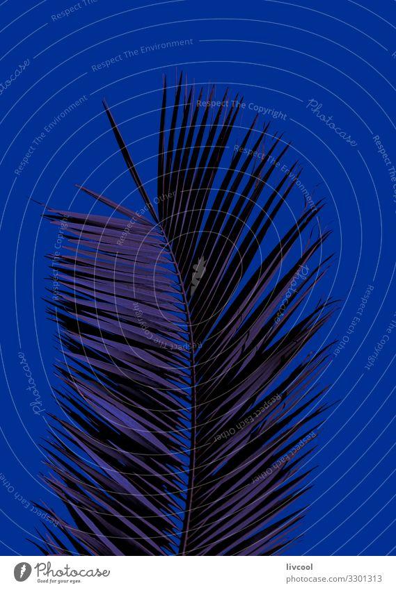 Palme auf blauem Klassiker Lifestyle Stil schön Sommer Natur Pflanze Baum Mode Coolness modern niedlich Einsamkeit Farbe Pantone Blau blauer Klassiker