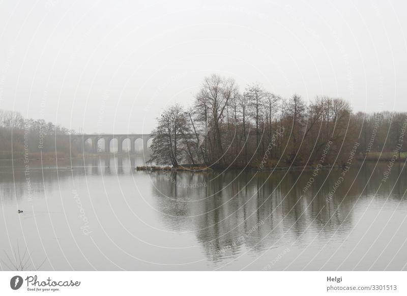Nebel am Obersee Himmel Natur Pflanze Wasser Landschaft Baum Wolken ruhig Winter schwarz Umwelt natürlich See grau Stimmung