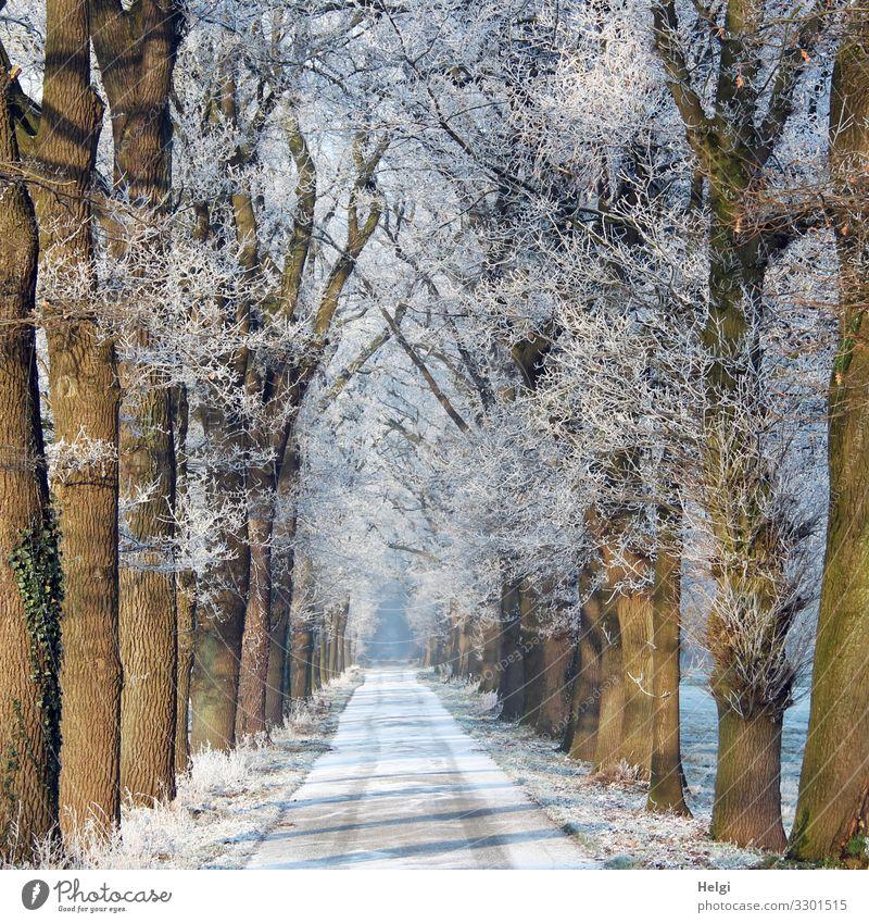 winterliche Allee mit Schnee auf der Straße und Raureif an den Bäumen Umwelt Natur Pflanze Winter Eis Frost Baum frieren stehen ästhetisch außergewöhnlich