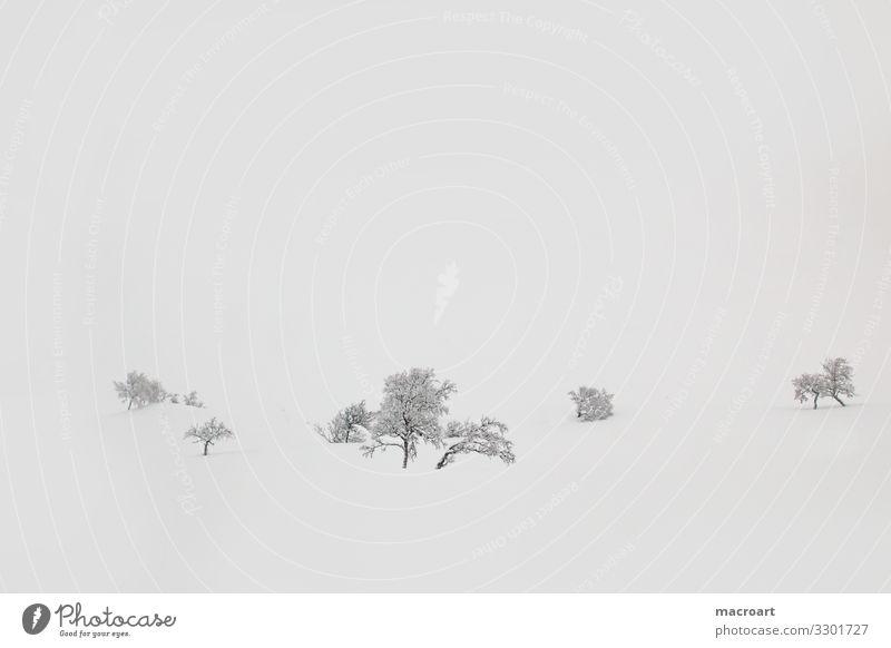 Bäume im Schnee Baum Schneelandschaft Nebel Schneefall Laubbaum Bergen Norwegen wallpaper Natur Winter Eis kalt kahl