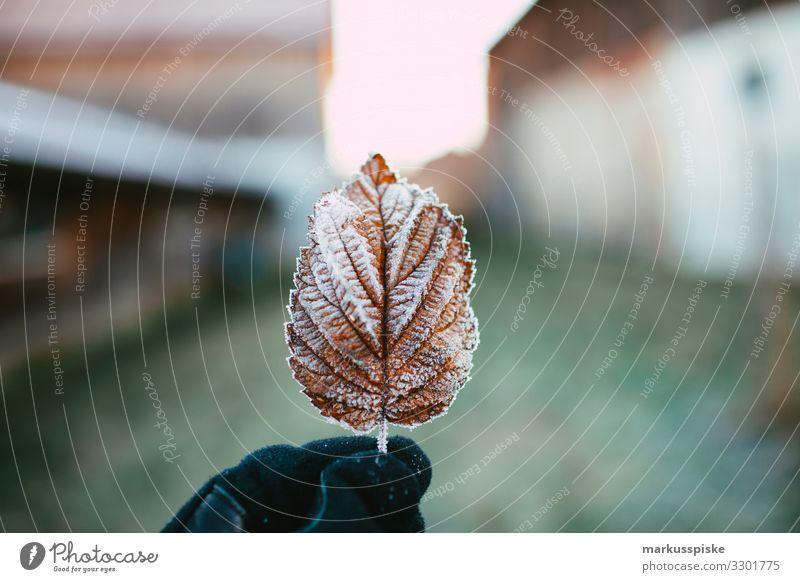 Gefrorenes Blatt Kindererziehung Bildung Wissenschaften lernen Gartenarbeit Mensch Mann Erwachsene Hand 1 18-30 Jahre Jugendliche Natur Pflanze Tier Winter