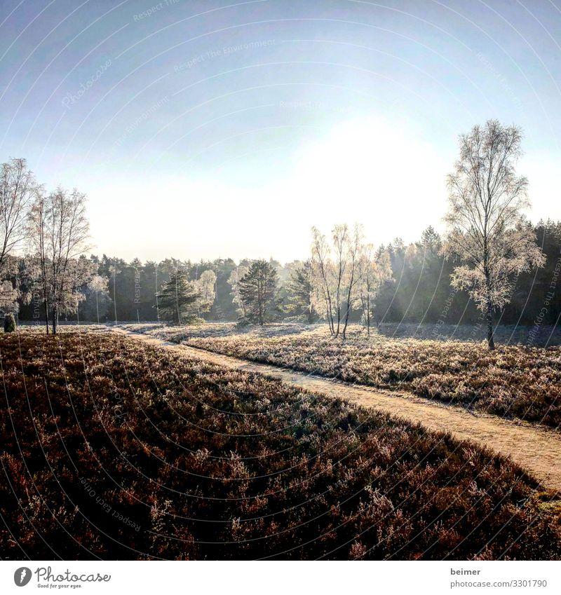 Winterheide Natur Landschaft Himmel Sonne Eis Frost Baum Heide Park Stimmung ruhig Frieden Klima Umwelt Farbfoto Außenaufnahme Menschenleer Textfreiraum oben