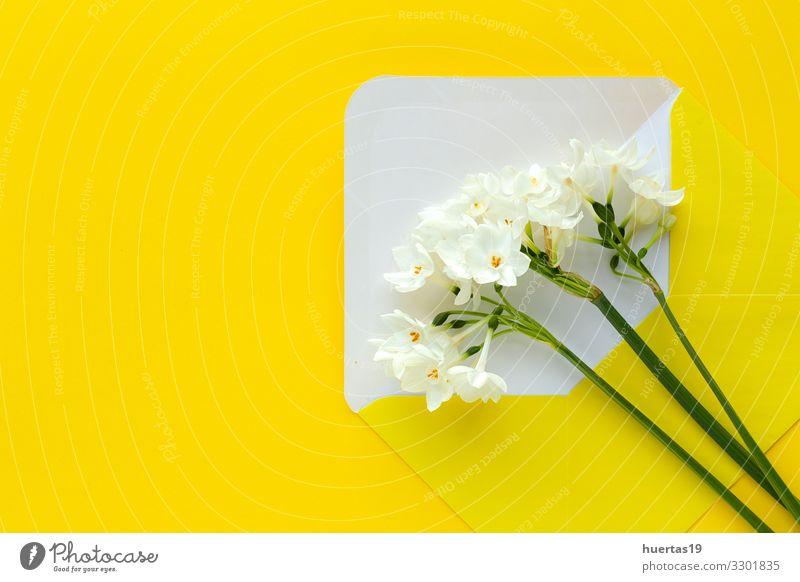 Frische Blumen auf farbigem Hintergrund von oben Lifestyle elegant Stil Design schön Dekoration & Verzierung Feste & Feiern Hochzeit Geburtstag Natur Blüte