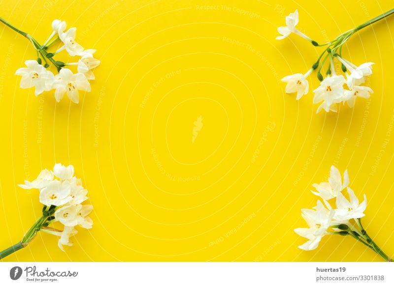 Frische Blumen auf farbigem Hintergrund von oben Lifestyle elegant Stil Design schön Dekoration & Verzierung Feste & Feiern Hochzeit Geburtstag Natur Pflanze