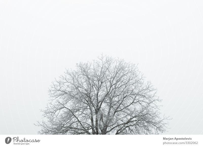 Gefrostete Baumwipfel im Winter Umwelt Natur Landschaft Pflanze Himmel Wetter Nebel Eis Frost Coolness hoch kalt natürlich Stimmung friedlich geduldig Weisheit