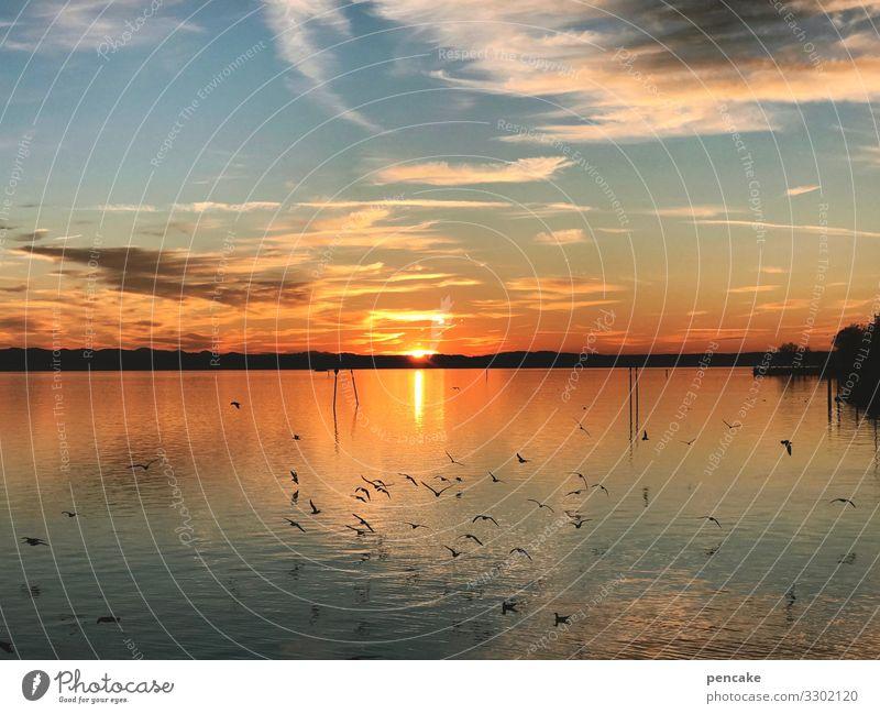 seeglühen Himmel Natur Wasser Landschaft Sonne Erholung Winter Wärme Stimmung Seeufer Urelemente Möwenvögel Bodensee glühend